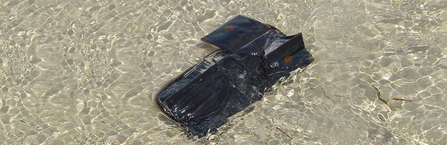 Leather wallet gets wet